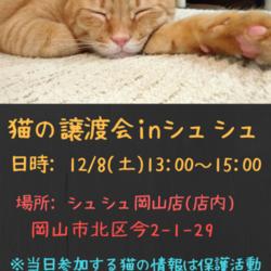 猫さんの譲渡会inシュシュ岡山店 サムネイル1
