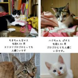 猫さんの譲渡会inシュシュ岡山店 サムネイル2