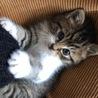 1ヶ月ちょいの子猫です