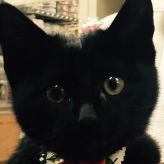 人懐こい黒猫です