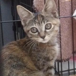 小顔美猫さんのソラちゃん