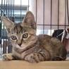 小顔美猫さんのソラちゃん サムネイル2