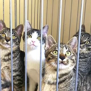 緊急!4兄弟の子猫たち
