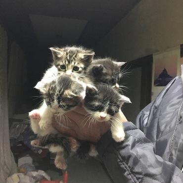 猫ちゃんの里親募集しています!