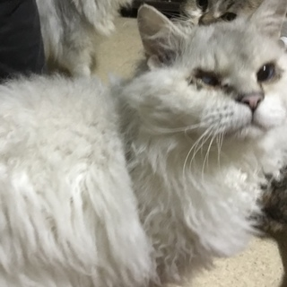 大人猫ちゃんですが、甘えん坊で優しい男の子です!