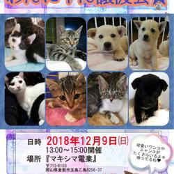 犬猫ほごっこ譲渡会★倉敷市玉島