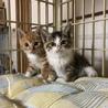 ドキドキしてます、子猫の兄妹 サムネイル4