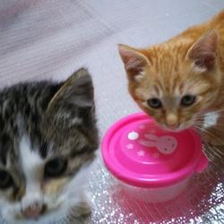「本日の保護にゃんこ~だって猫ですし~」サムネイル1