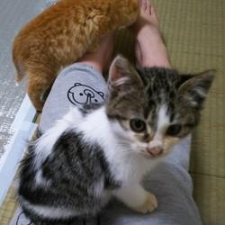 「本日の保護にゃんこ~だって猫ですし~」サムネイル2