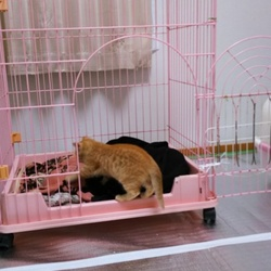 「本日の保護にゃんこ~だって猫ですし~」サムネイル3