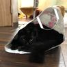 【空(くう)くん】とっても甘えん坊な中毛の黒猫 サムネイル7
