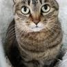 ☆大人猫さんご希望の方☆動画あり サムネイル7