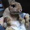 可愛い子ウサギ サムネイル2