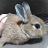 可愛い子ウサギ サムネイル4