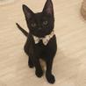 甘えん坊で人懐っこい黒猫ちゃん サムネイル2