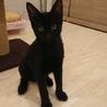 甘えん坊で人懐っこい黒猫ちゃん サムネイル3