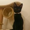 甘えん坊で人懐っこい黒猫ちゃん サムネイル5