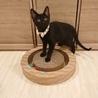 甘えん坊で人懐っこい黒猫ちゃん サムネイル6