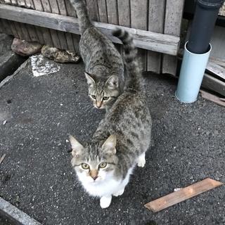 野良の子猫二匹の里親を募集します