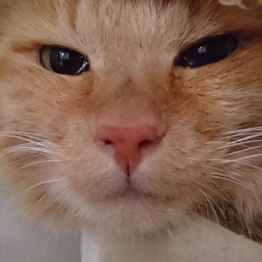 猫界のオードリーヘップバーンや~(ひ◯まろ風に) My Fair Ladyみたいだよ~、せっちゃん!素敵すぐるー♪