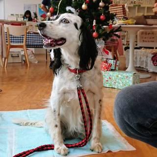 【ルーシー】人が大好きな中型犬