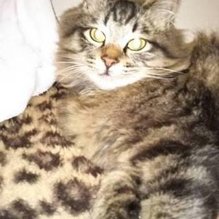 12月20日以降行き場を失ってしまう生後8か月の猫
