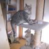 美猫姉妹 サムネイル3