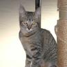 美猫姉妹 サムネイル6