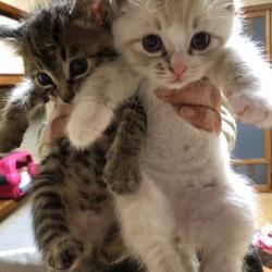 名古屋市西区円頓寺 12月16日(日)第86回リトルパウエイド猫の譲渡会