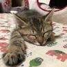 子猫の里親募集(=^・^=) サムネイル2