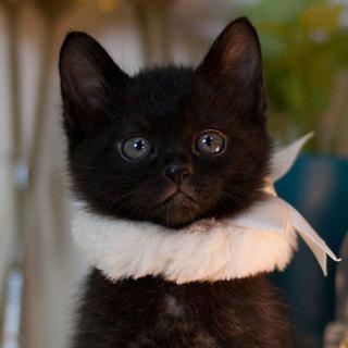 インスタ映えする黒猫くん