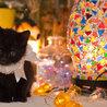 インスタ映えする黒猫くん サムネイル3