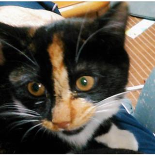 三毛猫のミーちゃん