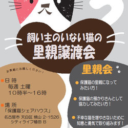 「保護猫シェアハウス・育む」 毎週土曜 譲渡会