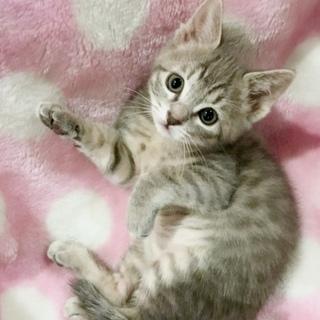 1ヶ月半 女の子らしい子猫