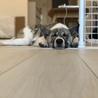 中型のmix犬です