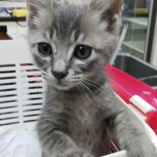 里親さんが決定しました!保健所子猫