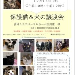 保護猫&保護犬の譲渡会