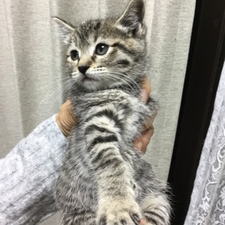 可愛い子猫③  キジトラ女の子