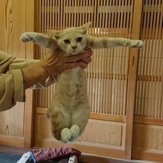 家猫修行済み・クリーム色男子です