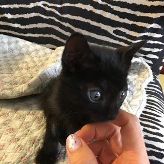 とても人懐っこくて可愛い子猫です