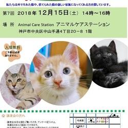 """猫の譲渡会inアニマルケアステーション""""猫のミーナ"""""""