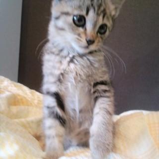 ☆生後1カ月半の美猫ちゃん☆