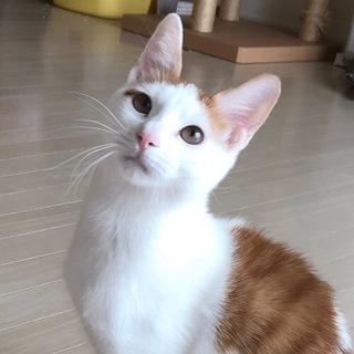初心者歓迎!美猫茶白兄妹ペアで