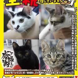 にゃんこのみち主催 第5回 猫の譲渡会