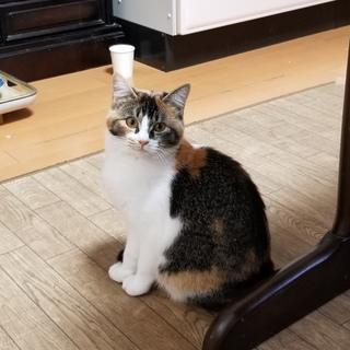 子猫 メス 人懐こく、外見もかわいいです