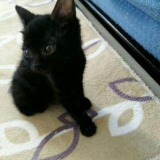 黒猫男の子、里親募集中!!