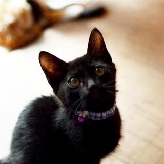 かわいい黒猫男子【こーた】