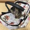 生後3ヶ月の子猫の里親を募集しております。