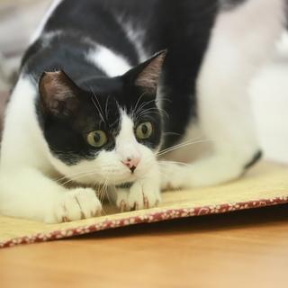 ウルトラ甘えたさんのストーカー猫さんです。